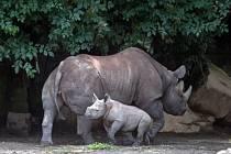 V zoologické zahradě ve Dvoře Králové nad Labem pokřtili 30. července dvě v červnu narozená mláďata nosorožců dvourohých.