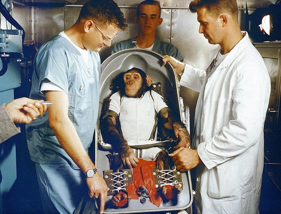 Tříletý šimpanz Ham absolvoval let v lehátku speciálně upravené návratové kosmické kabiny. Vesmírná loď Mercury-Redstone dosáhla po startu maximální výšky 254 kilometrů nad Zemí