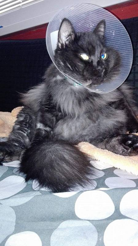 Náš roztomilý Mikešek po operaci.