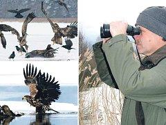 SČÍTÁNÍ. Konečné orientační počty orlů mořských budou známy až dnes. Na rybníce Podsedek jich však pracovník CHKO Třeboňsko Jiří Bureš (na snímku) napočítal rekordních deset.