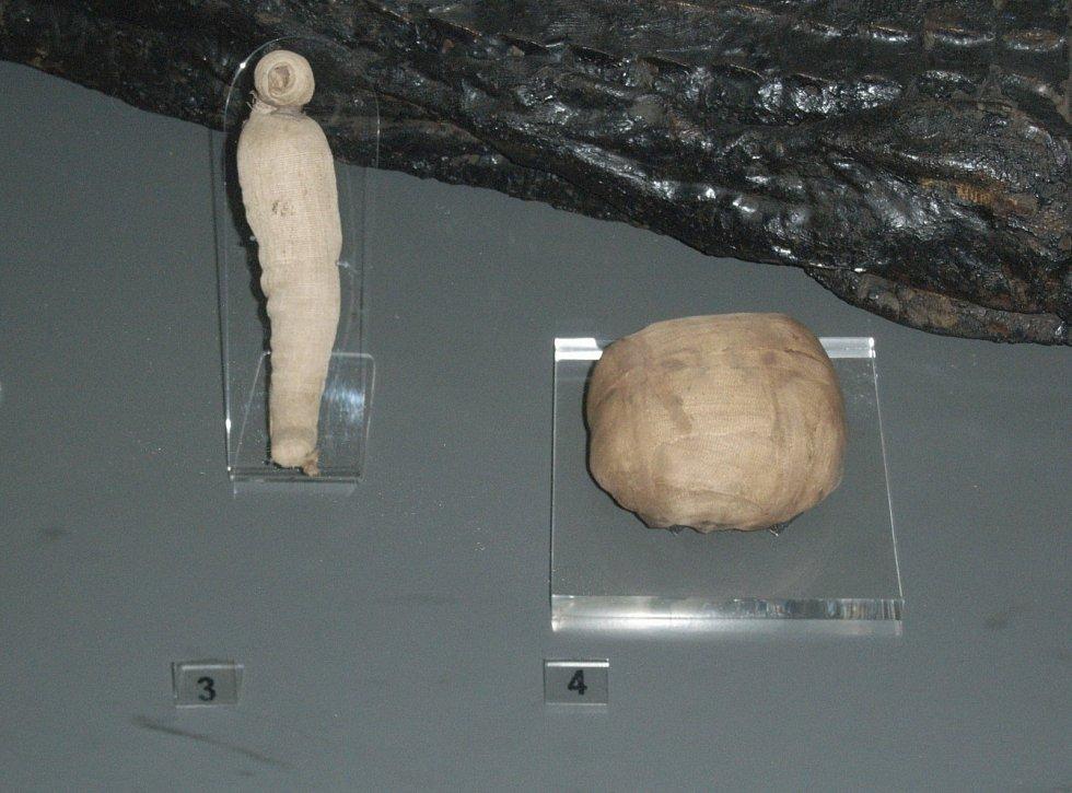 Mumifikované ptáče a had na výstavě věnované starověkému Egyptu v muzeu v Birminghamu