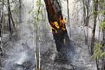 Lesní požár v Krasnojarském kraji na ruské Sibiři