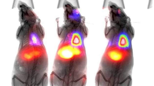 Sledovat dění uvnitř těla v reálném čase a bez zbytečné zátěže organismu umožní zobrazovací přístroj, který jako jedno z mála pracovišť na světě bude mít 1. lékařská fakulta Univerzity Karlovy. Na snímku je zobrazení nádorových buněk v živých modelech.