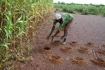 Africké zemědělství. metoda Zai