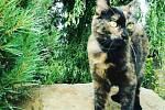 Kočičí pacient Anička.