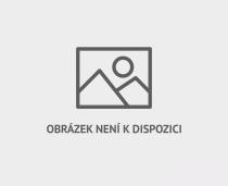 Dalším obyvatelem Bělověžského pralesa je strakapoud bělohřbetý.