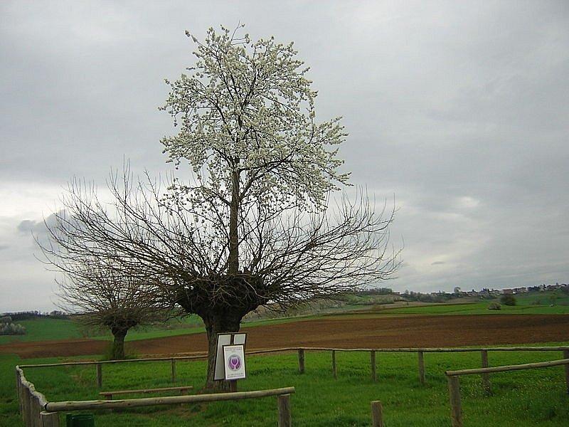 Dvojitý strom v italském Piemontu