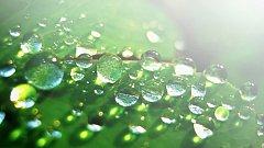 S kapkami rosy stékají po listech i nečistoty. Na tzv. rosa efektu funguje i omítka DuoCem.