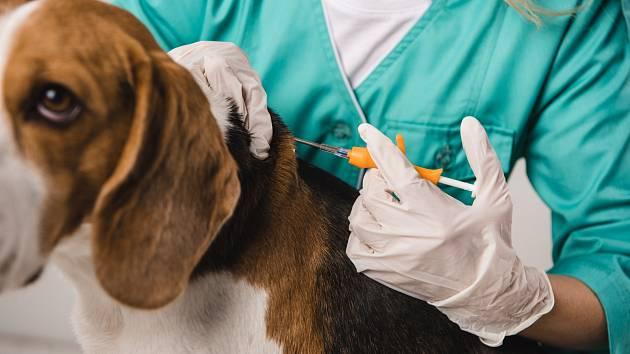 Veterináři budou mít povinnost zapsat psa do evidence do sedmi dní od čipování nebo očkování či přeočkování