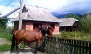 Koně z Koločovy