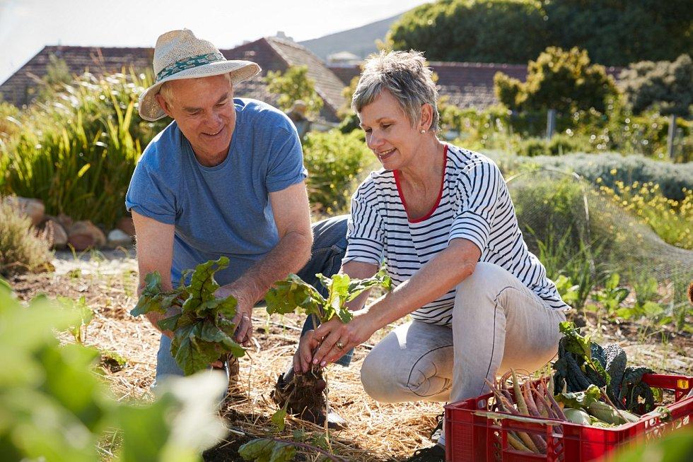 Pokud víte, že daná půda není plnohodnotnou zeminou, ze které by rostliny měly radost, nebo je dokonce plná toxických látek, poohlédněte se spíše po variantách vyvýšených záhonů.