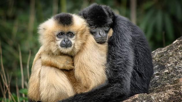 Jakmile zvířata vycítí nebezpečí, zapomenou na mezidruhové půtky. Na snímku je opice