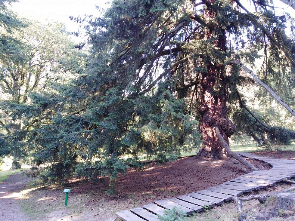 Americká zahrada Chudenice