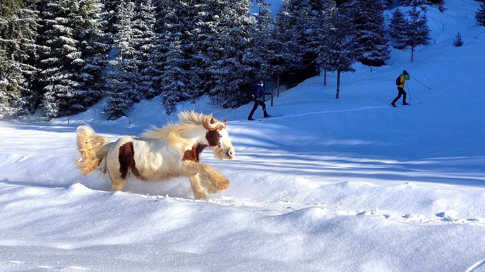 Rodina z Jelení chová také koně