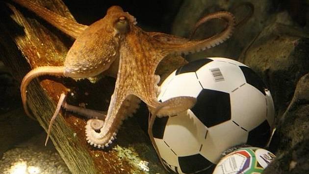 Chobotnice Paul