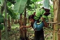 Plantáže v Kostarice