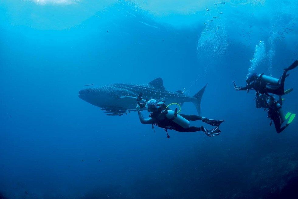 Potkat žraloky, obří manty anekonečná hejna barakud je vmístních vodách zcela běžné.