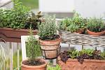 Jakou nádobu bylinkám vyberete, je na vás. Bylinkovou klasikou jsou hliněné květináče a dekorativní terakotové truhlíky.