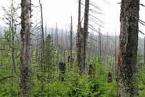 Národní park Bayerischer Wald