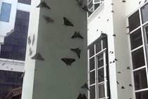 Malajsii zaplavily obří můry.