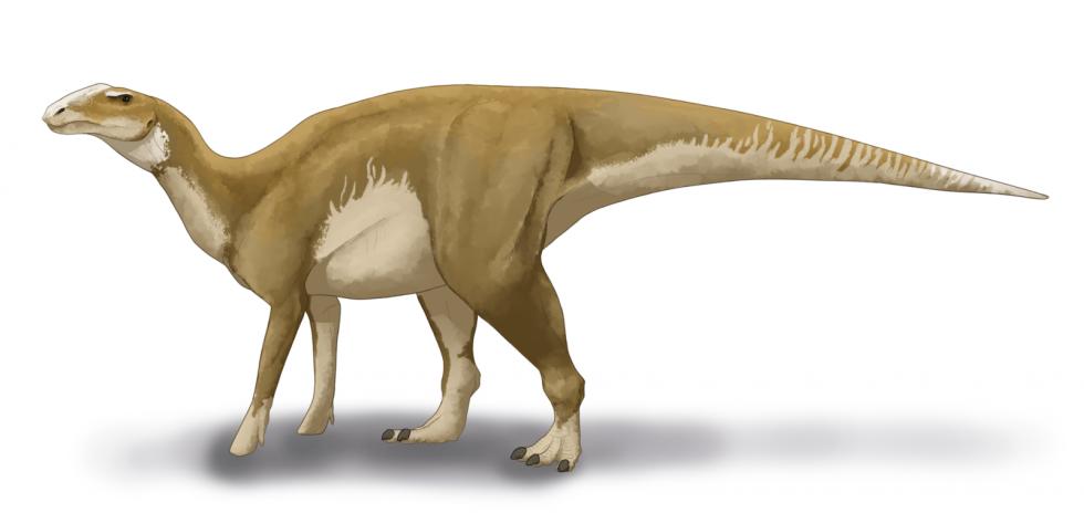 Rekonstrukce hadrosaura na základě fosilních nálezů