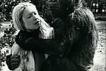 Gorilí samice Koko se svojí ošetřovatelkou
