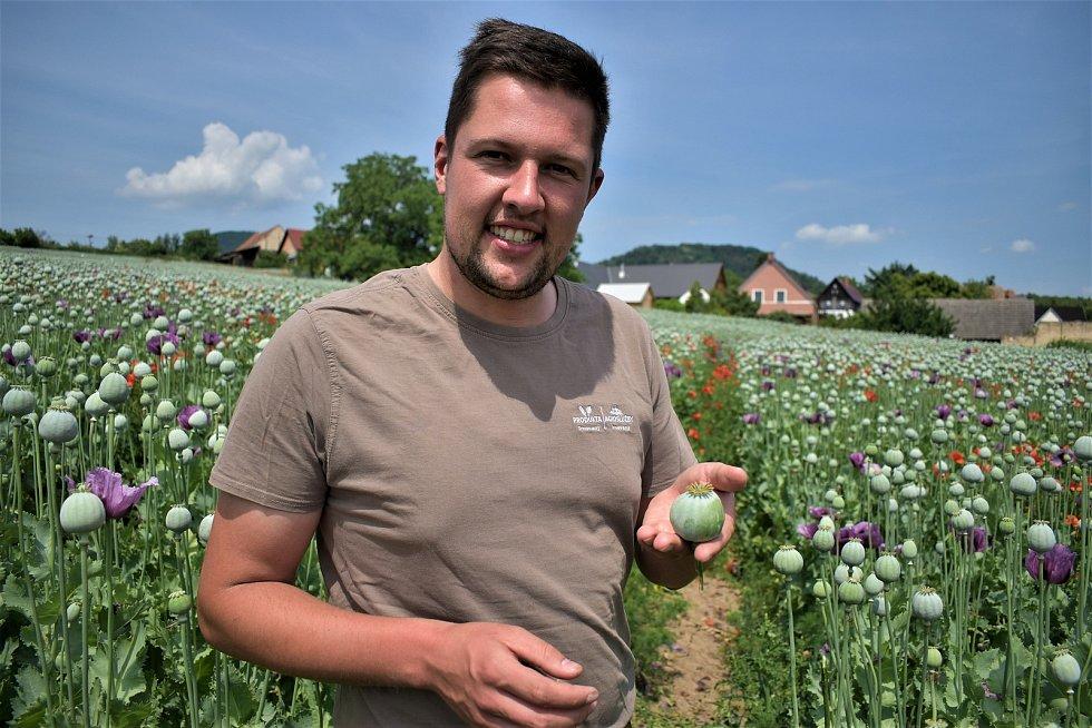 Němec Niklas Klingebiel pěstuje mák na Litoměřicku. Foto Deník/Jaroslav Balvín
