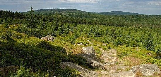 Prales Jizera. Tato přírodní rezervace je nejstarší zcelých Jizerských hor. Rozkládá se na vrcholu Jizery, druhé nejvyšší hory jejich české části, která je součástí hejnického hřebene.