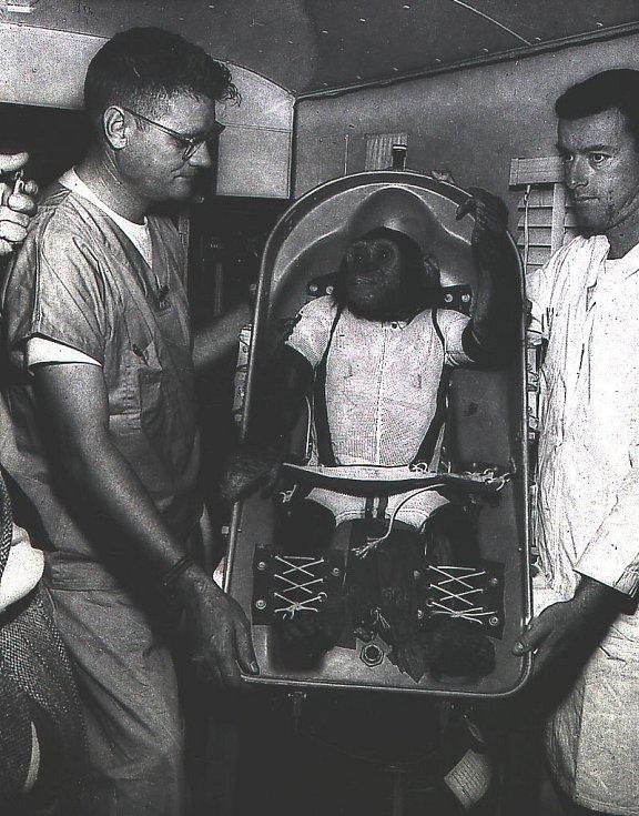 Šimpanz Ham je ve speciálním lehátku přenášen na palubu vesmírné lodi