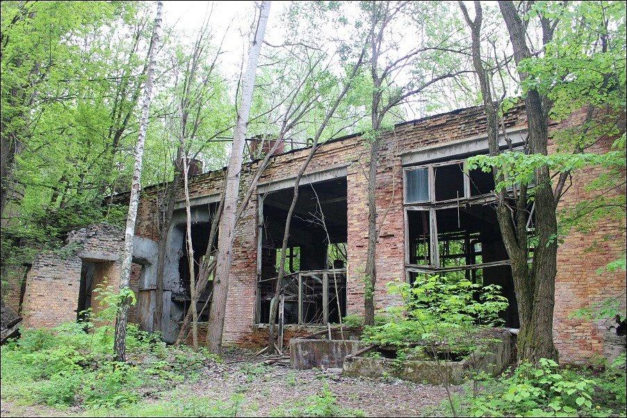 V opuštěných černobylských panelácích, obchodech a úředních budovách sovětské éry přebírá vládu příroda