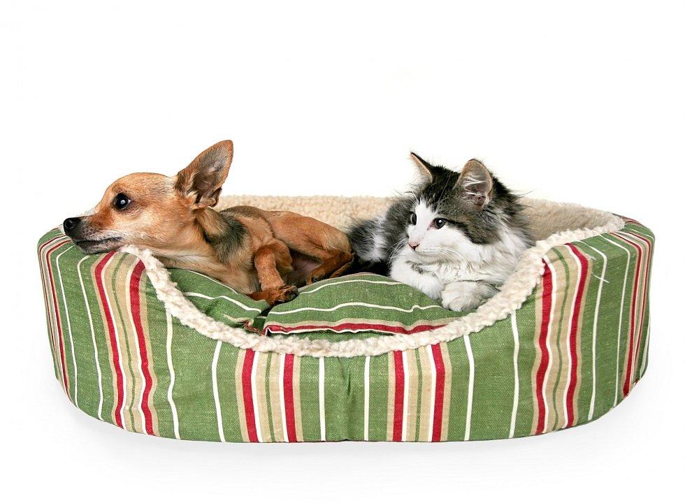 Než začnete vybírat vhodný pelíšek, zamyslete se nad jeho rozměry i funkcí a také nad zvyklostmi vašeho mazlíčka.