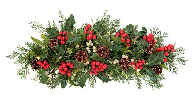 Cesmína se hodí pro vánoční dekorace