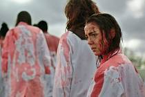 Sámská krev