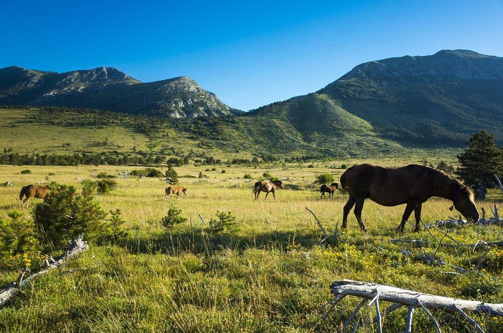 Paklenica, Velebit, Chorvatsko. Volně žijící koně