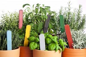 Pro domácí pěstování sice nepotřebujete zvláštní zahradnické zkušenosti, nicméně postavit květináč s rostlinkou někam na vnitřní parapet a občas ji zalít přece jen nestačí.