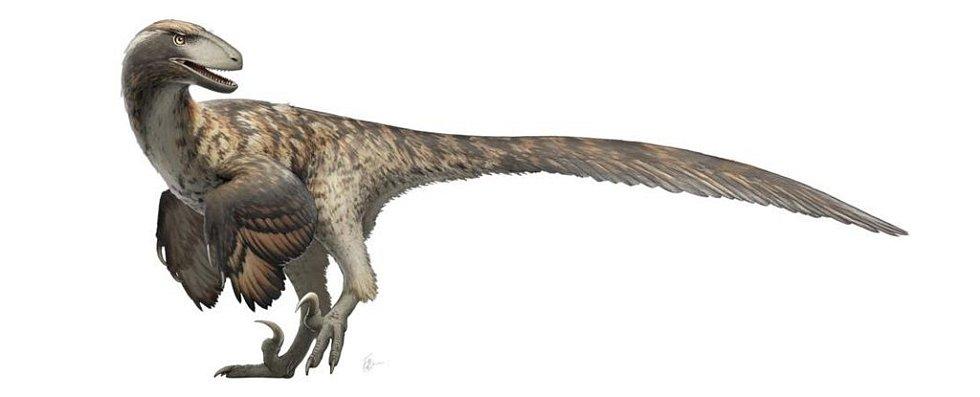 Na rozdíl od představy velociraptorů z Jurského parku počítá většina současných vědeckých rekonstrukcí raptorů s tím, že byli opeření