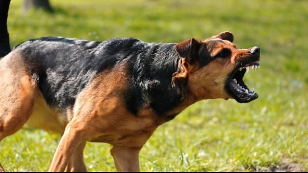 Agresivní pes. Ilustrační snímek