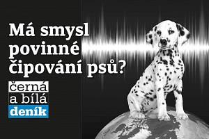 Má smysl povinné čipování psů?