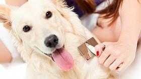 Péče o psí srst - Ilustrační foto