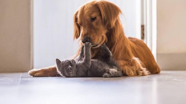 Rozumíte řeči psů a koček?