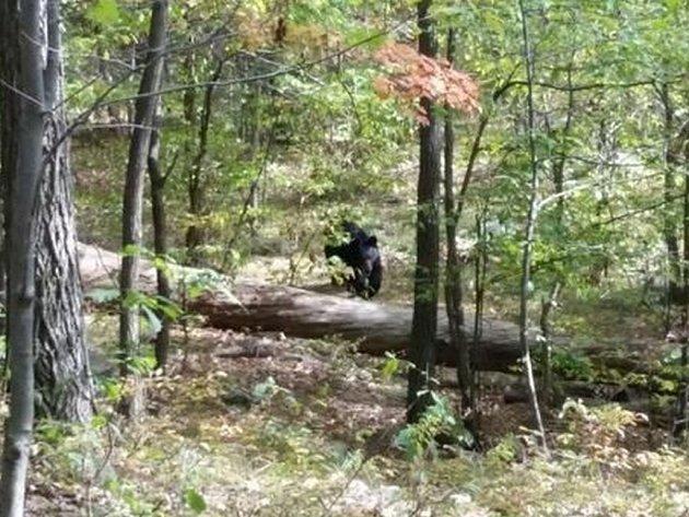 Místo toho, aby se skryl před útokem medvěda, rozhodl si jej vyfotit. Útok rozzuřené šelmy následně dvaadvacetiletý Darsh Patel nepřežil.