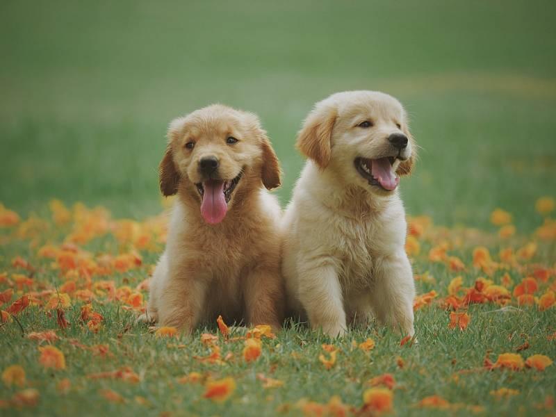 Psy může potrápit zubní kámen či záněty dásní nebo závěsného aparátu.