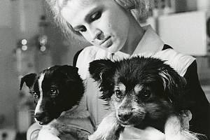 Dvojice sovětských psů Veterok a Ugoľok dodnes drží rekord v délce pobytu psa ve vesmíru.