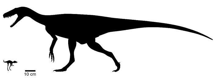 Kongonaphon kely v porovnání s raným dinosaurem druhu Herrerasaurus