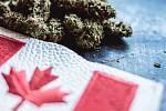 Kanada legalizovala užívání konopí pro rekreační účely