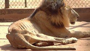 Hladovějící zvířata ve venezuelské zoo