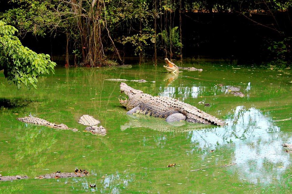 Krokodýl - Ilustrační foto