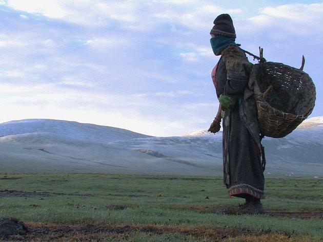 FLIM – Festival tibetských filmů a filmů o Tibetu, snímek z filmu Letní pastviny