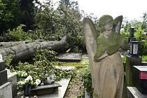 Desítky hrobů na prostějovském hřbitově poničily dva mohutné buky vyvrácené z kořenů při bouři, která se přehnala 1. července 2019 nad střední Moravou. Snímek je z 2. července