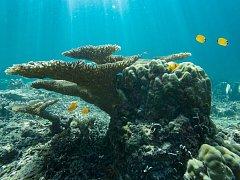 Korálové útesy v moři ohrožují krysy na pevnině, ilustrační foto